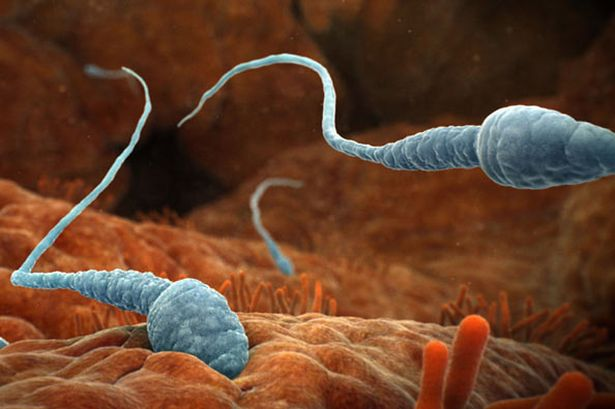 le sperme sous le microscope