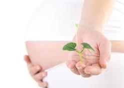 BabyStart FertilCheck Plus Plante Verte SpecialHomme.com